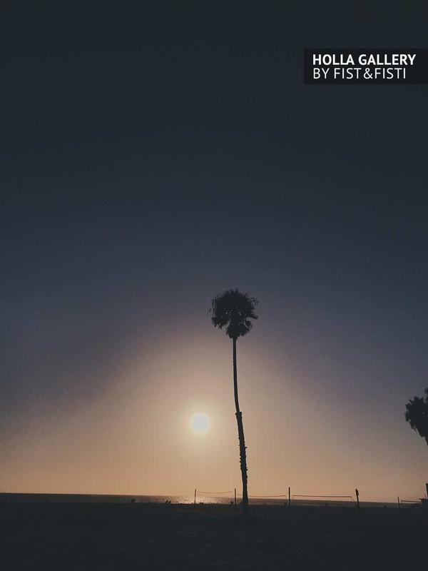 Пальма на берегу на фоне заката в Santa Monica. Фотокартина