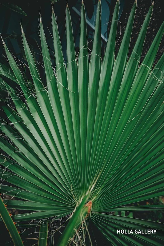 Пальмовые листья на земле