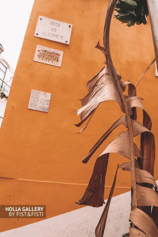 Засохший пальмовый лист на фоне желтого здания в Лиссабоне.