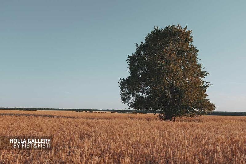 Одинокое дерево в поле, постер для интерьера, фото картина