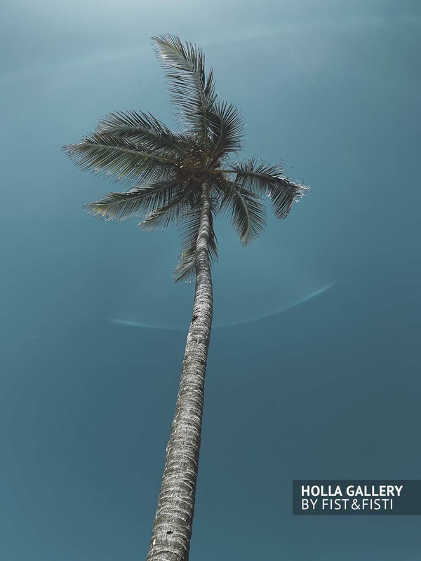 Пальма на фоне чистого неба в Доминикане. Плакат на стену