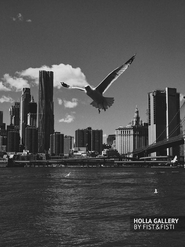 Чайка над Нью-Йорком. Черно-белые принты
