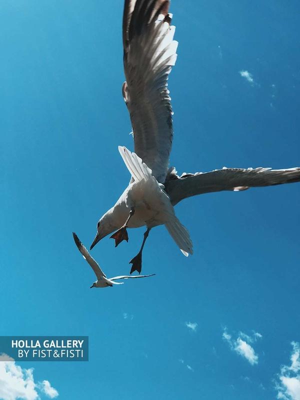 Чайки в небе, фото картина, минимализм