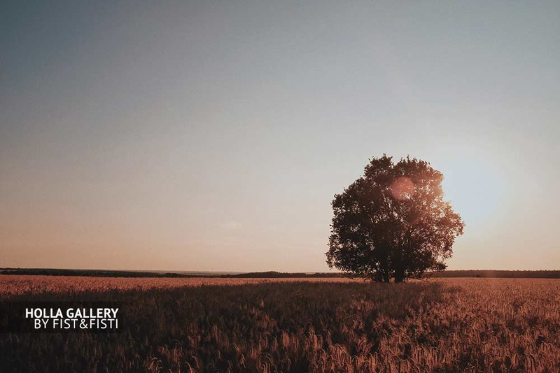Дерево в поле на закате, небо. Фото картина