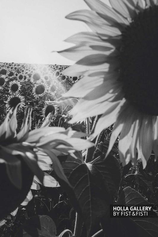 Черно-белая фотография подсолнухов для оформления дома
