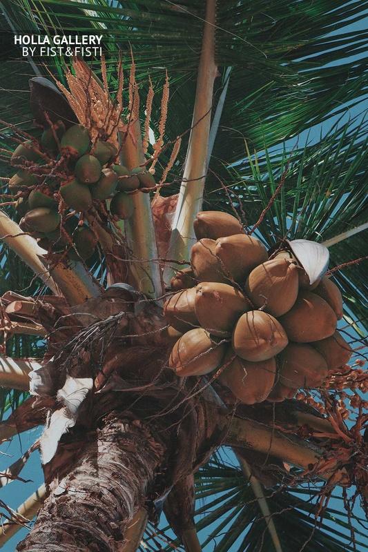 Кокосовая пальма Доминиканской республики. Фото для декора интерьера