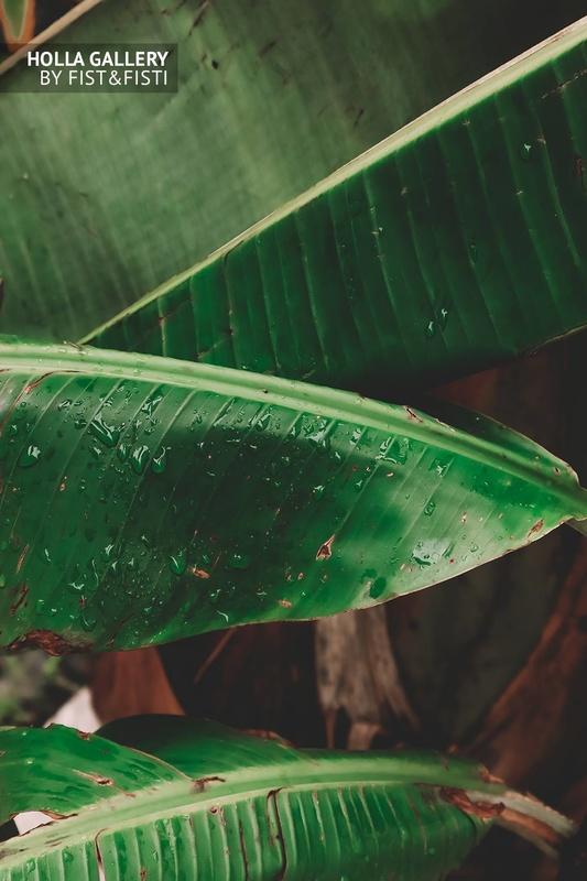 Пальмовый лист с каплями после дождя.