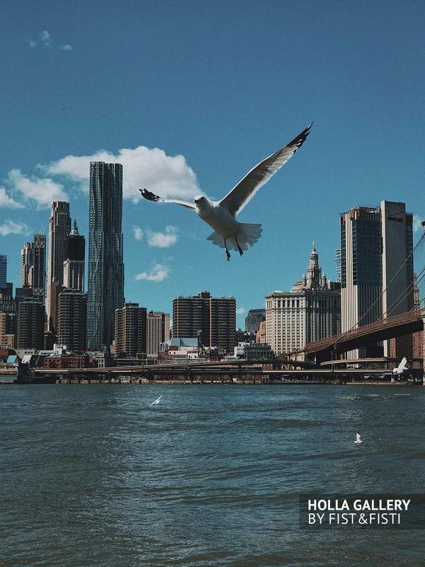 Чайка, Нью-Йорк, река, панорама