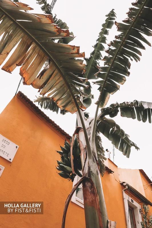 Пальма на фоне желтого здания. Картина для интерьера