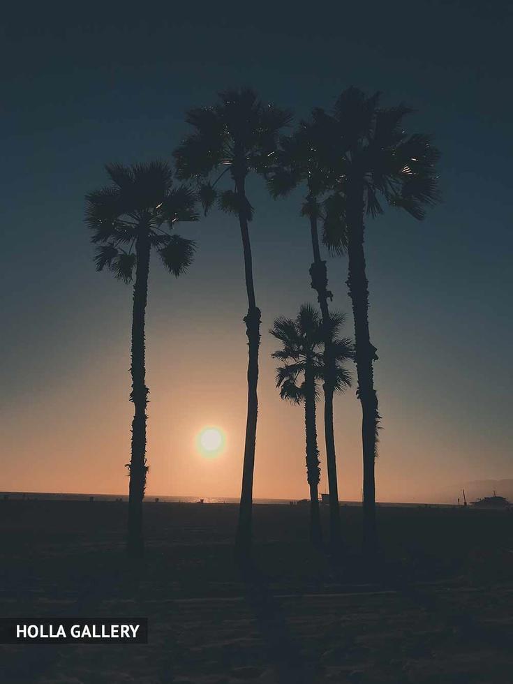 Высокие пальмы на берегу на закате