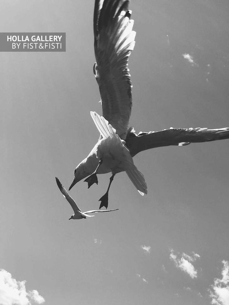 Парящие чайки в небе, чб фото