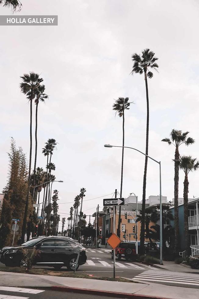 Улица в Нью-Йорке с пальмами и знаками
