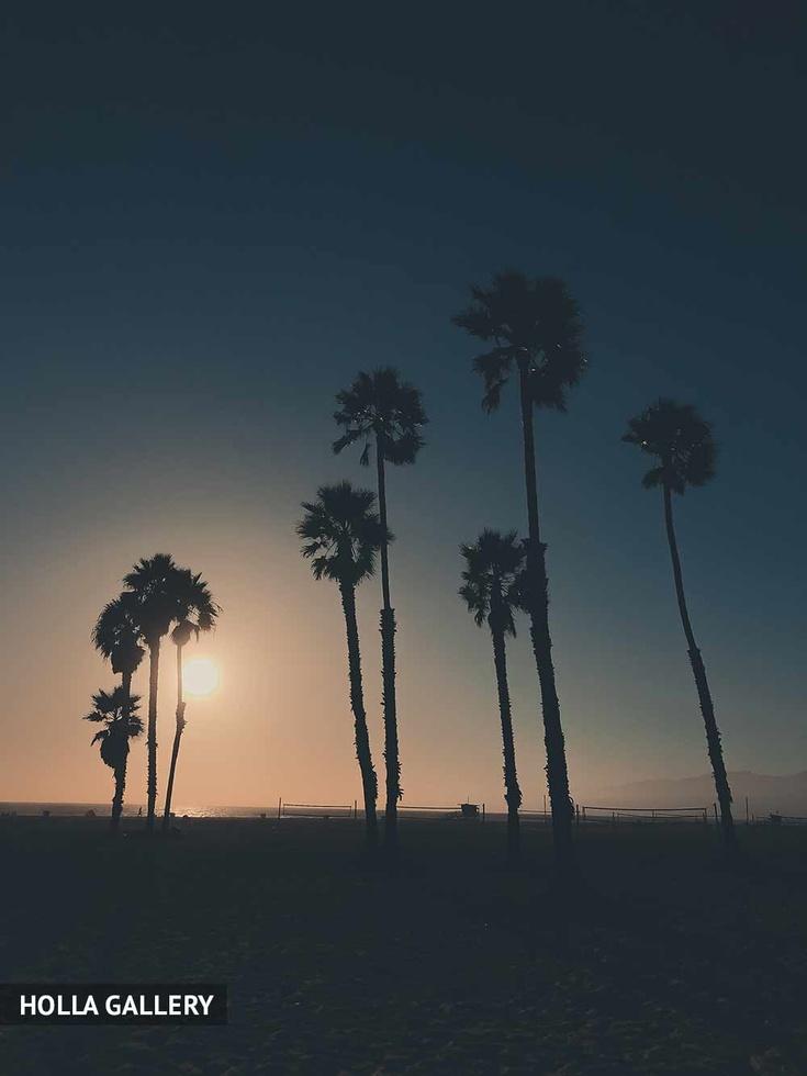 Пальмы на горизонте во время заката