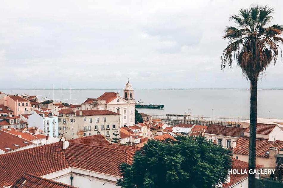 Пальма и крыши домов на берегу Лиссабона