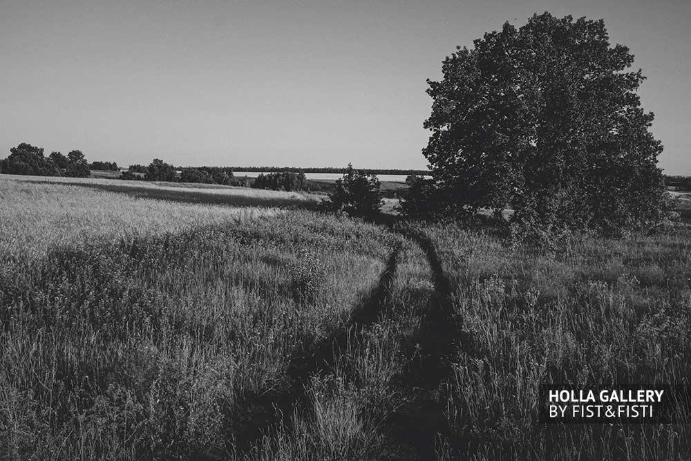 Дорога в поле между деревьев, чб постер