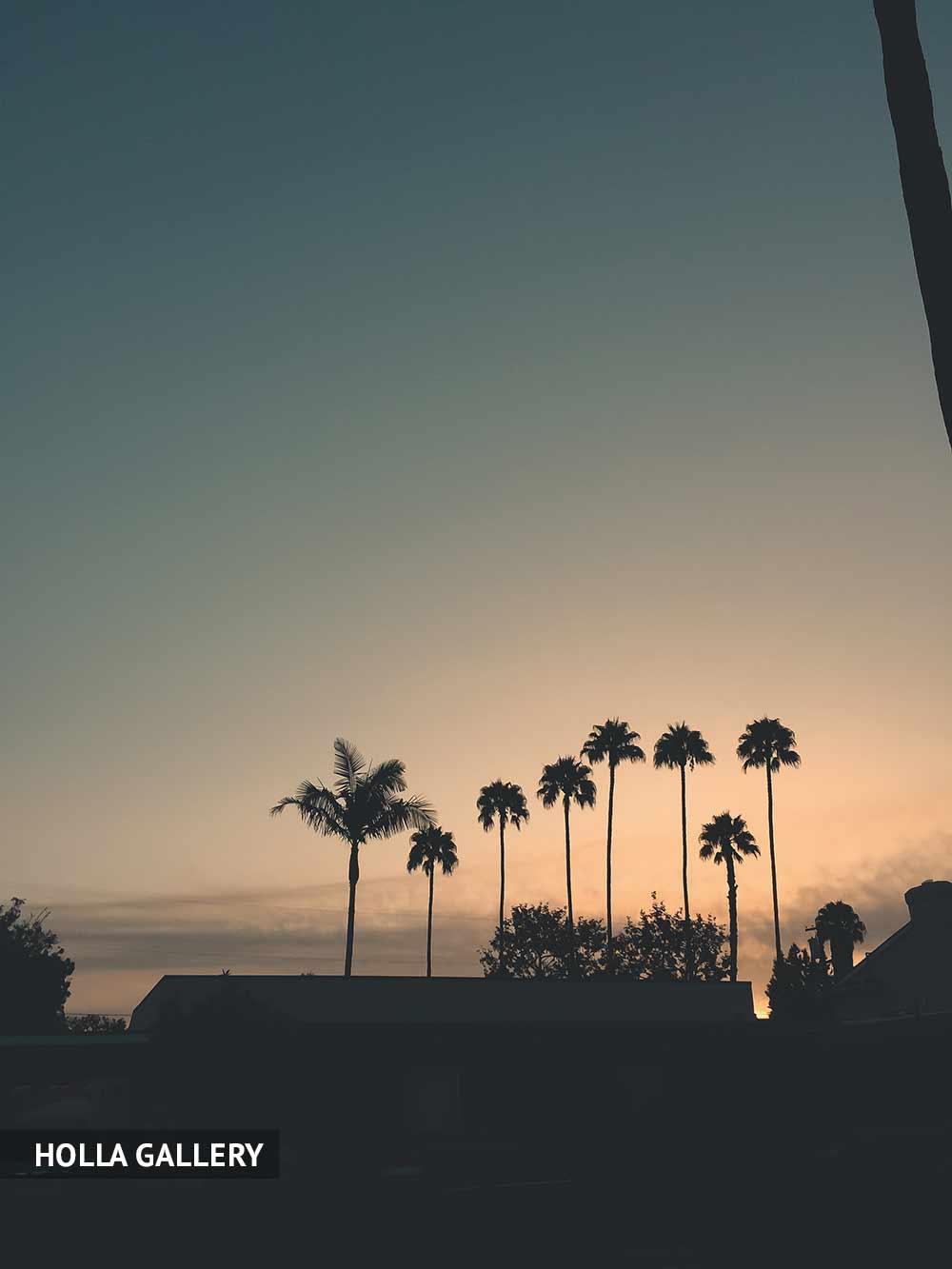 Пальмы на пляже Санта-Моника