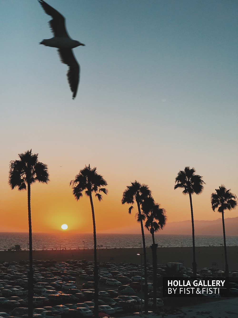 Чайка на фоне пальм и заката на Santa Monica beach
