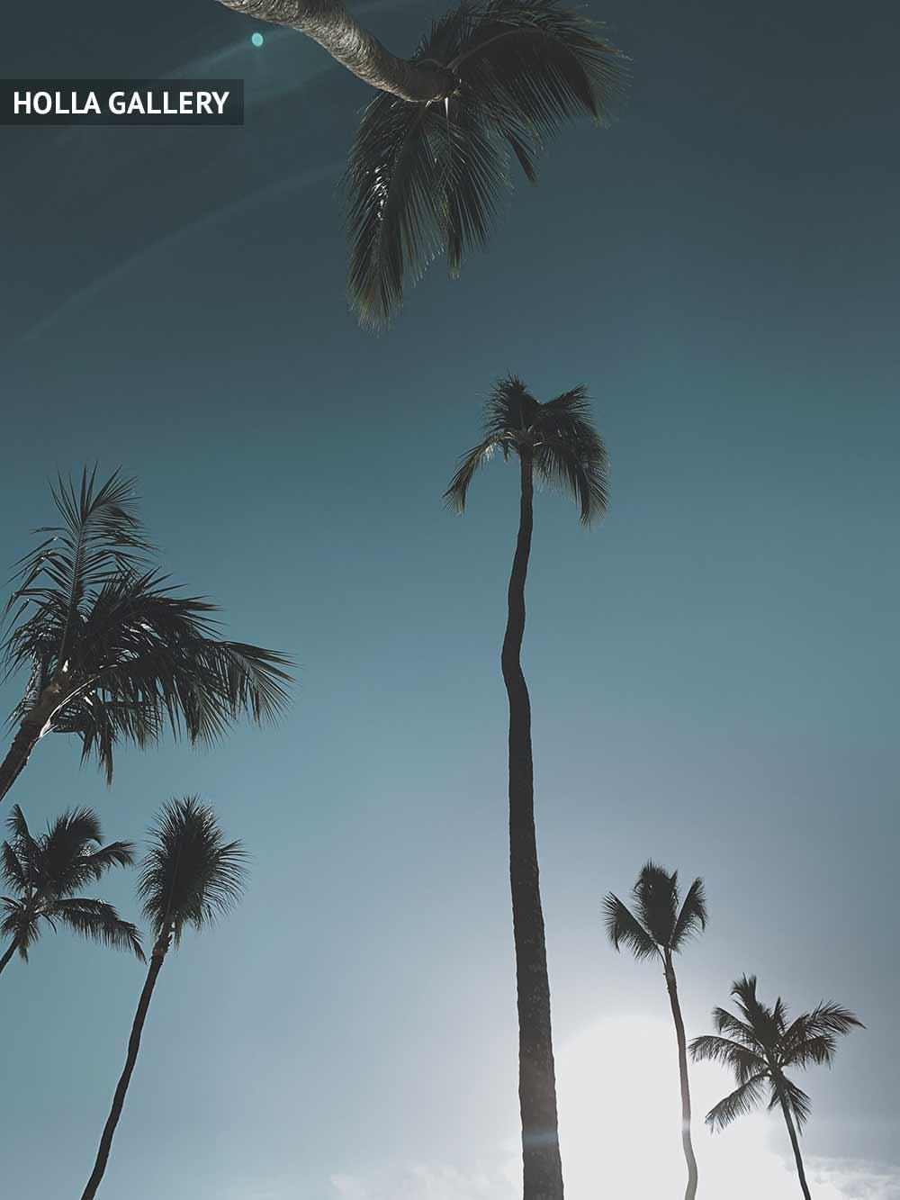 Высокие пальмы в Доминикане
