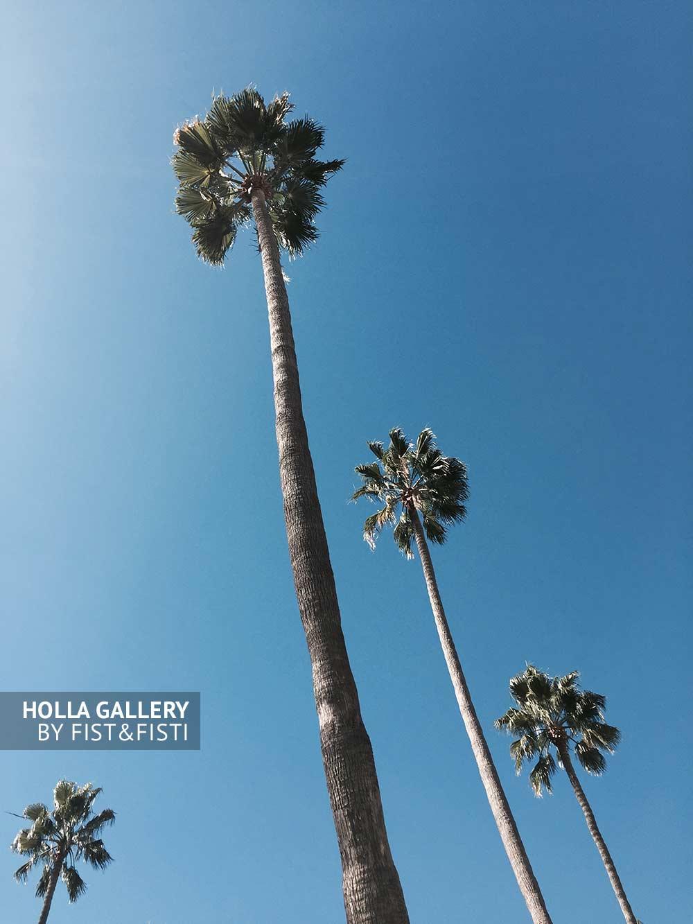 Пальмы на Venice Beach, небо Калифорнии