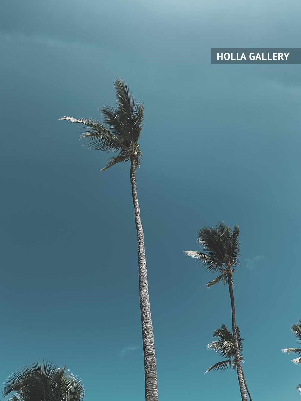 Пальмы на фоне неба в Доминикане