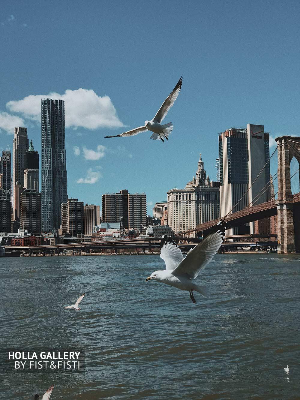 Чайки над Ист-Ривер в Нью-Йорке и вид на Манхэттенский мост. Фотография для интерьера