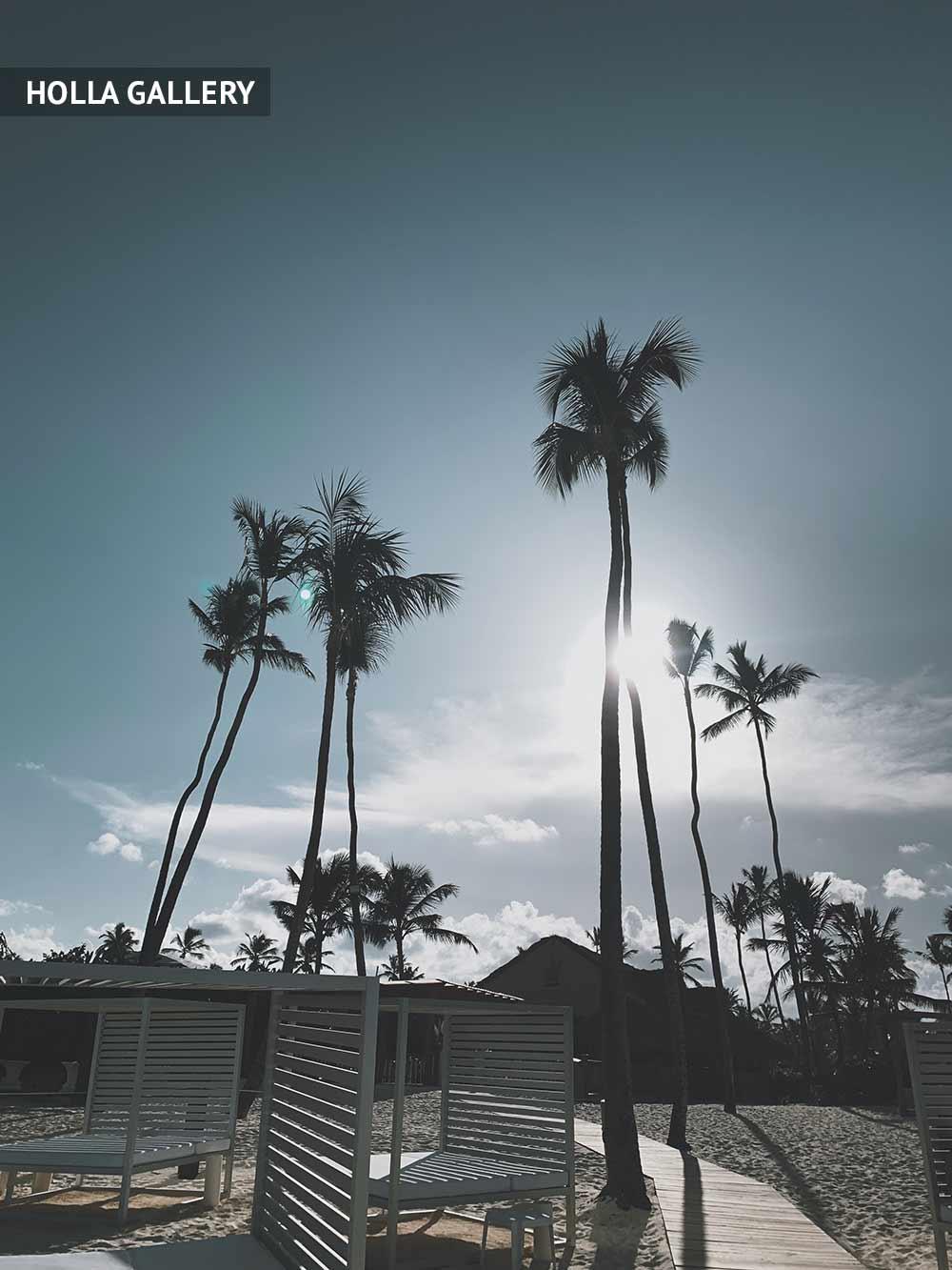 Пальмы Доминиканы на фоне солнца